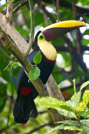 Carate, Costa Rica: photo2.jpg