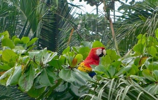 Carate, Κόστα Ρίκα: photo5.jpg