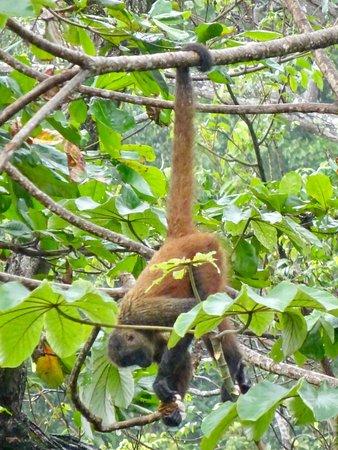 Carate, Κόστα Ρίκα: photo7.jpg