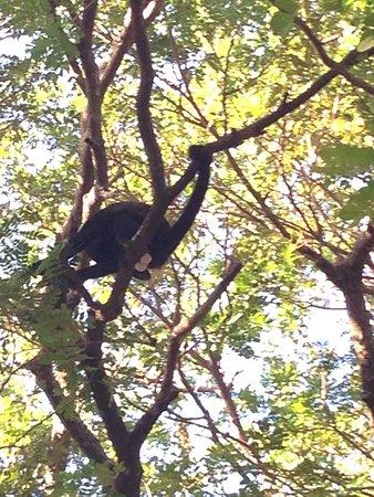 Aqua Sport : Ceveche pescado. The monkeys were in the trees near the street.