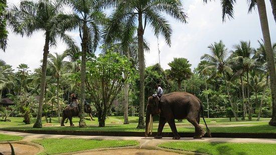 Tegalalang, Indonesia: Beautiful grounds