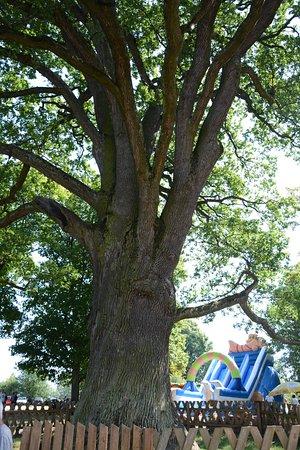Lublin Province, Poland: Bolko Oak Tree