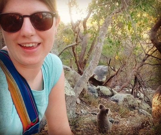 Isla Magnetic, Australia: IMG_20161203_071413_large.jpg