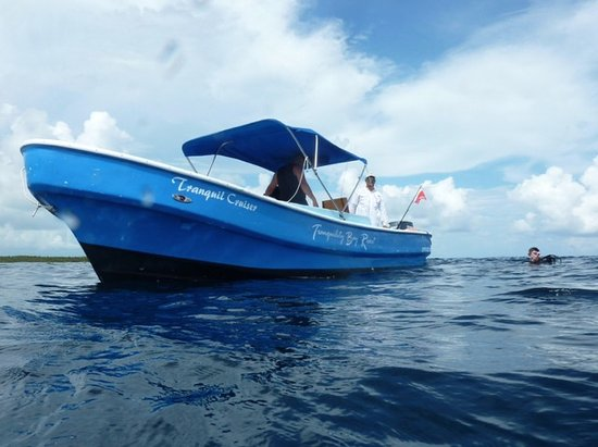 Tranquility Bay Resort: dive boat