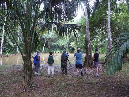 San Ignacio, Belize: Belize Botanic Garden