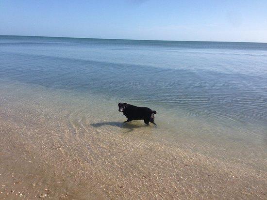 Херви-Бей, Австралия: Walking the dog, crystal clear sea at Dundowran beach