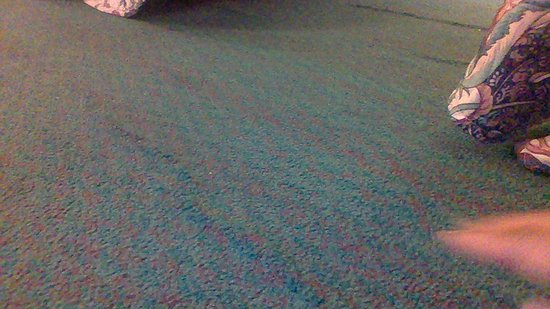 Junction City, OR: Bulking in carpet throughout the room. Enough that I tripped and almost fell.