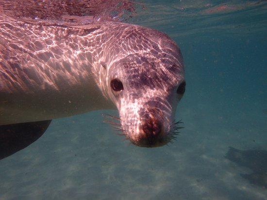 Port Lincoln, Australie : Sea Lion