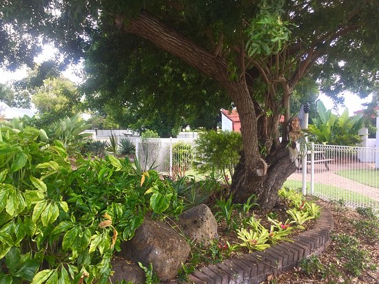 Bundaberg Spanish Motor Inn: Gardens