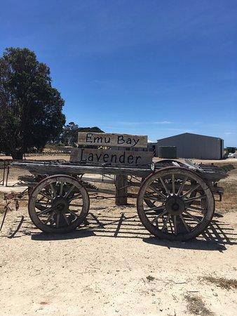 Emu Bay Lavender Omdömen om restauranger TripAdvisor