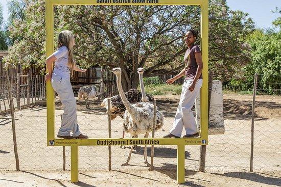 Foto Safari Ostrich Show Farm