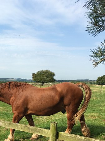 Guiting Power, UK: The Suffolk punch