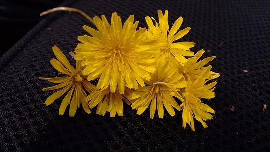 Bastante árbol con flores amarillas fotos, imágenes y fotos de Facebook, Tumblr, Pinterest y Twitter