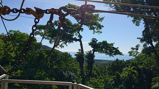 Cape Tribulation, Australia: Tree Platform view