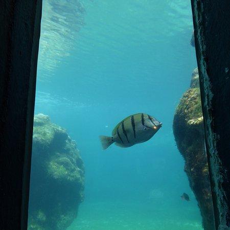Saint-Leu, Reunion Island: Kelonia