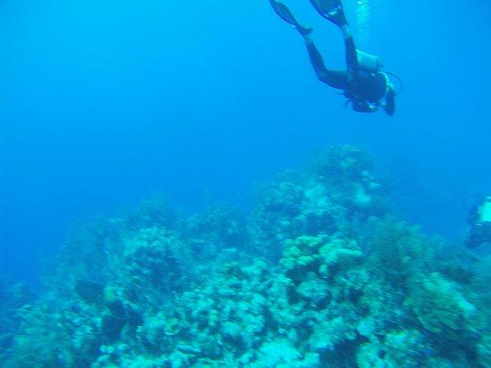 Belize Diving Services: IMG_0996_large.jpg