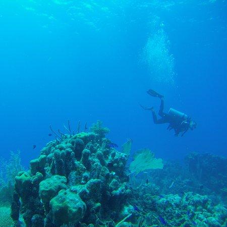 Belize Diving Services: IMG_20161201_074230_large.jpg