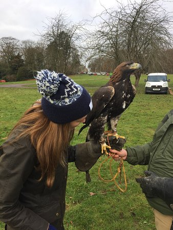 Newark-on-Trent, UK: Hawks Of Steele