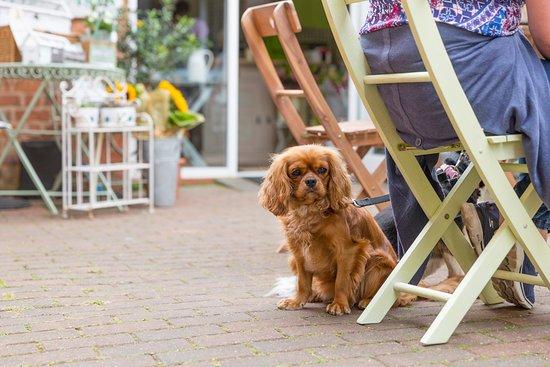 Бромсгроув, UK: dogs are welcome