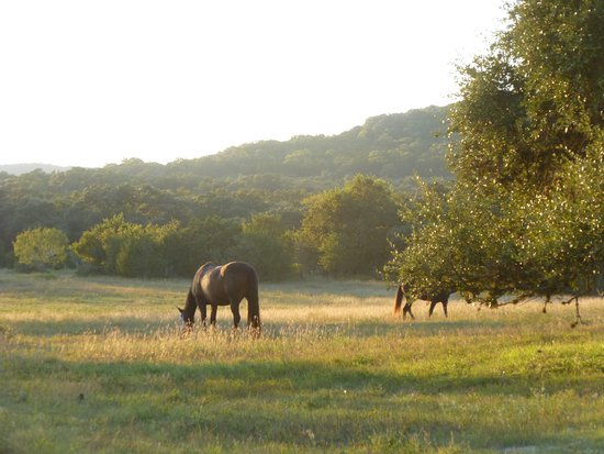 Bandera, TX: This is us- Hill Country Equestrian Lodge