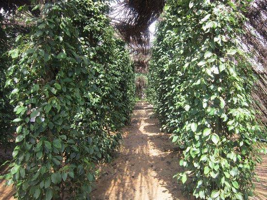 Kep, Kambodsja: photo1.jpg