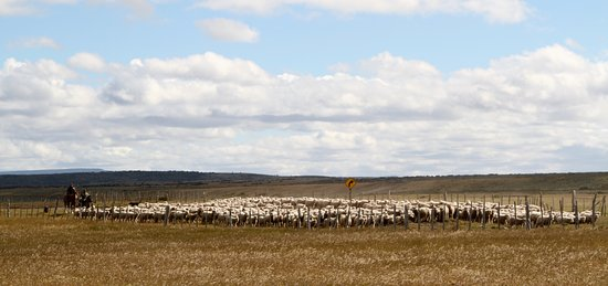 Posada Estancia Rio Verde: Op de Posada Rio Verde wordt ook de schapenteelt bedreven. Dit levert mooie plaatjes op !