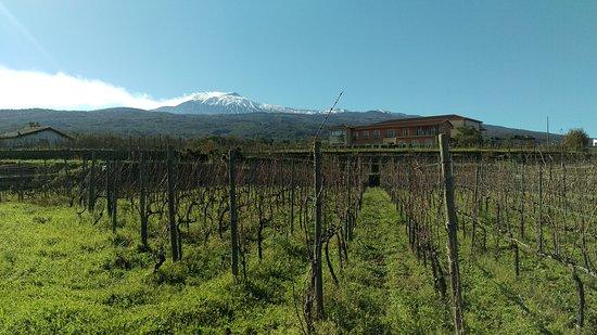 Assaggi di inverno in contrada #Martinella #Etna #Linguaglossa  #Nerello #Mascalese,  Nerello #C