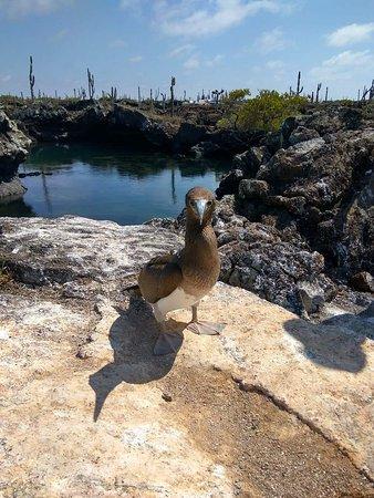 Puerto Villamil, Ισημερινός: received_10209884159413740_large.jpg