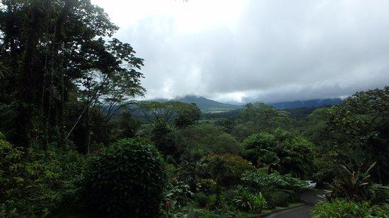 Lost Iguana Resort & Spa: Upper Room View