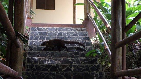 Lost Iguana Resort & Spa: Wildlife