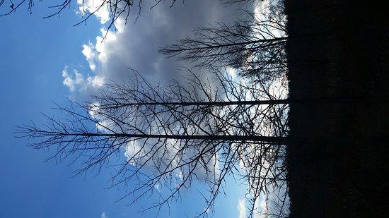 Westampton, Nueva Jersey: Trees