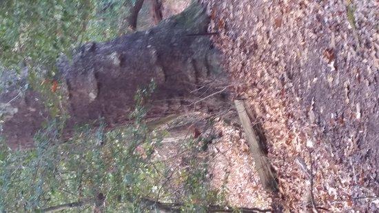 Westampton, Nueva Jersey: Tree face