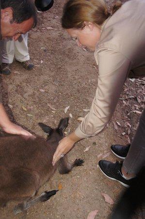 Hanson Bay, Australia: кенгуру