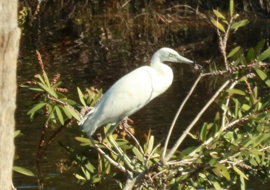 Fort Pierce, Floride : Birds galore! A quite area with a new paved trail.