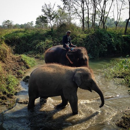 Sauraha, نيبال: Local villagers caring for the elephants in the river