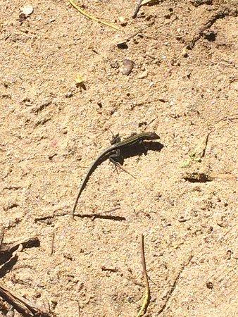 Cahuita National Park: photo3.jpg