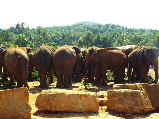 Pinnawala, Sri Lanka: in the orphange