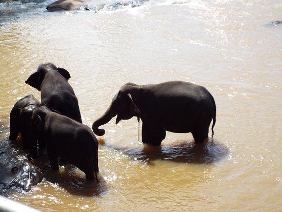 Pinnawala, Sri Lanka: at the river