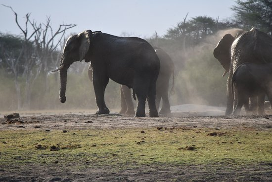 Hwange National Park, ซิมบับเว: Visitors at the watering hole