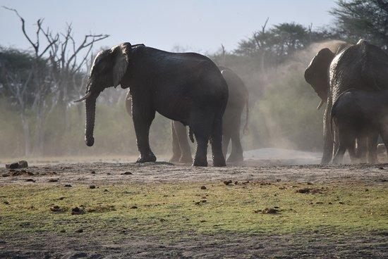 Hwange National Park, Zimbabwe: Visitors at the watering hole