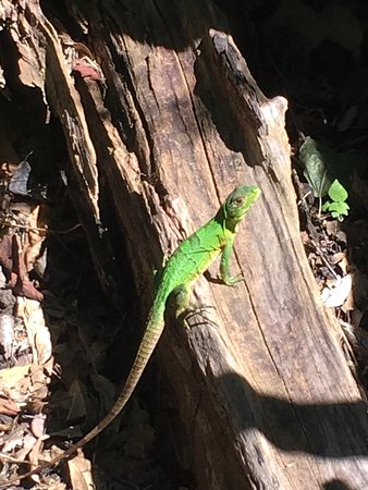 La Cruz, Κόστα Ρίκα: A small visitor to our picnic area