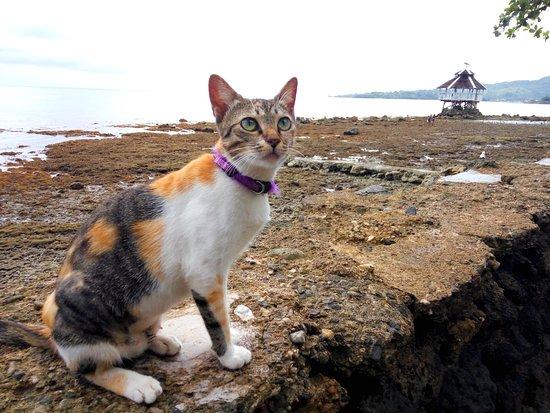 Jagna, Filippinerna: One of our  cats  Jojo
