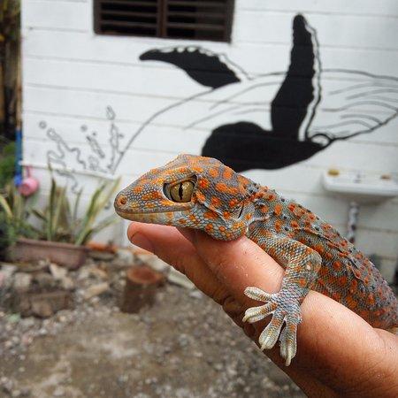 Jagna, Philippines: Our resident gekko (tuko in filipino) saying hi