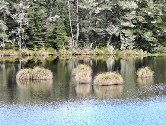 Fiordland National Park, Nieuw-Zeeland: Mavora Lakes