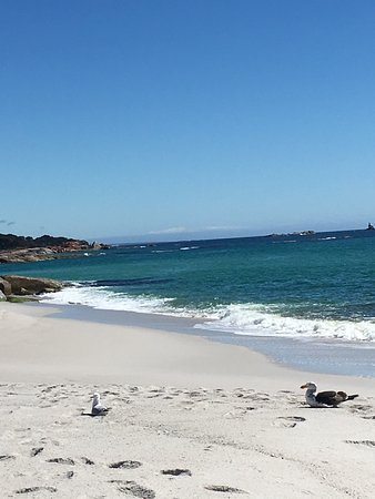 Tasmania, Australia: Insanely blue sea and lovely white sandy beaches