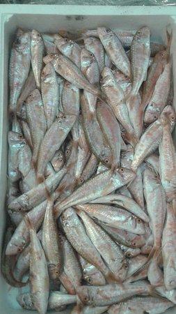 Signa, Italy: Materie prime: solo pesce freschissimo