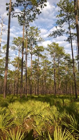 Olustee, FL: Typical View of the Battlefield