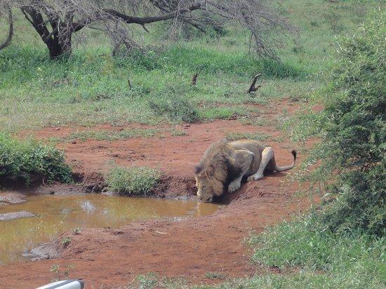 St Lucia, แอฟริกาใต้: I am thirsty!