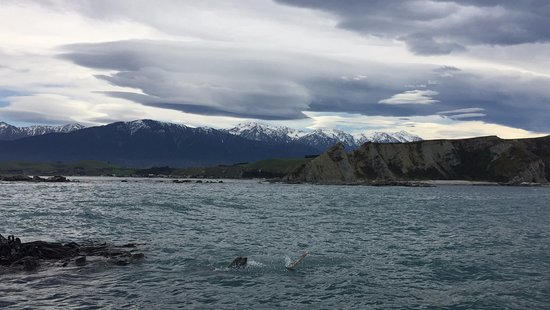 Kaikoura, Nueva Zelanda: We took this photo on our way to the seal colony. This seal was eating an octopus!