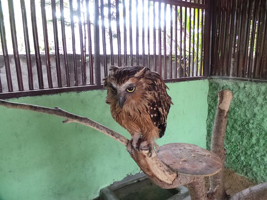 Tanjung Benoa, Indonesia: Sad owl, stuck in a cage for the rest of his life